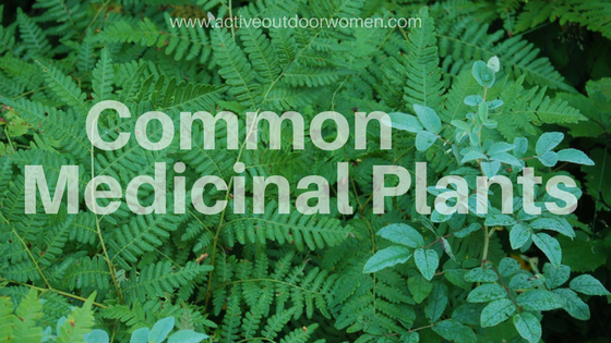 common medicinal plants image