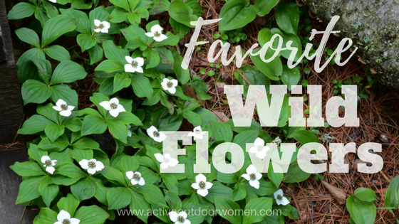 favorite wild flowers