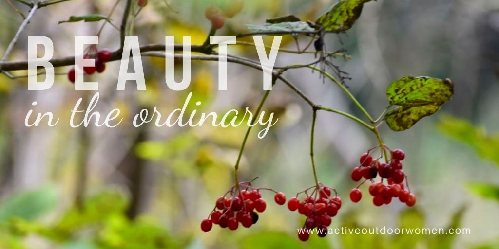 beauty in the ordinary