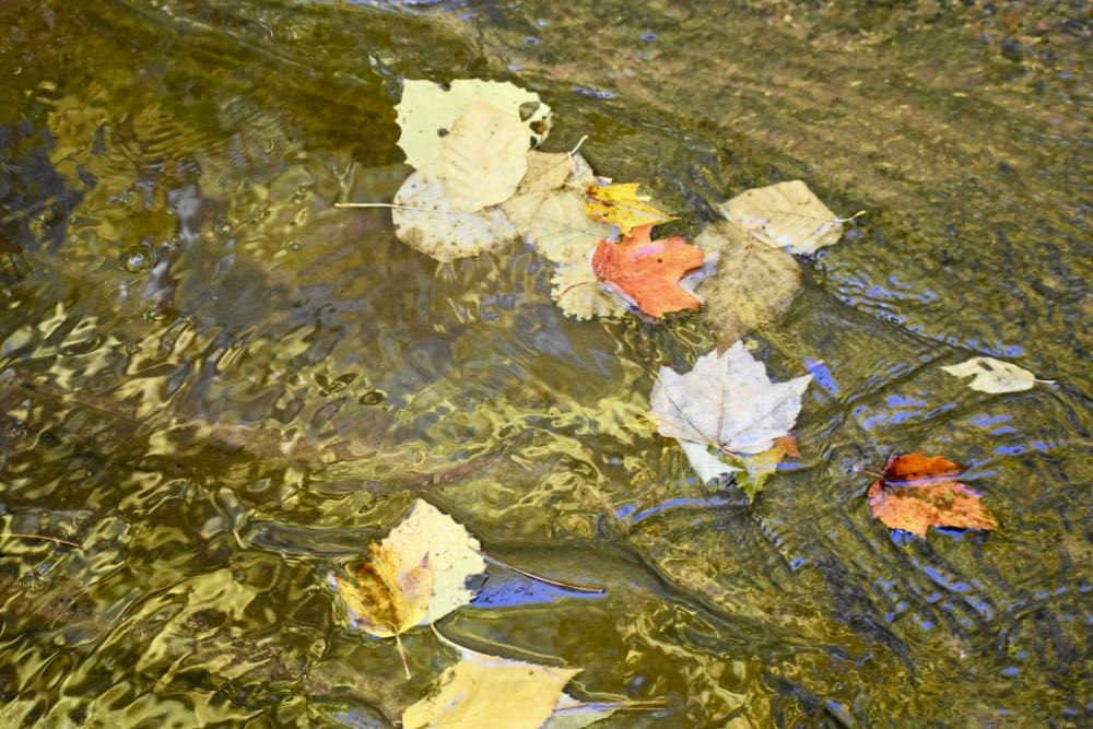 leaves in the creek