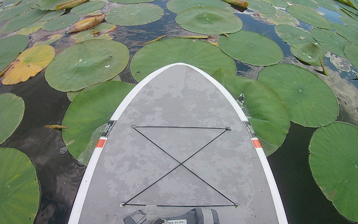 paddleboard in lily pads